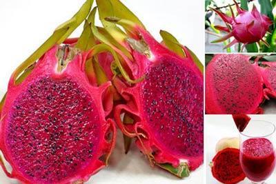 红心火龙果和白心火龙果处理颜色不同之外 还有哪些区别?