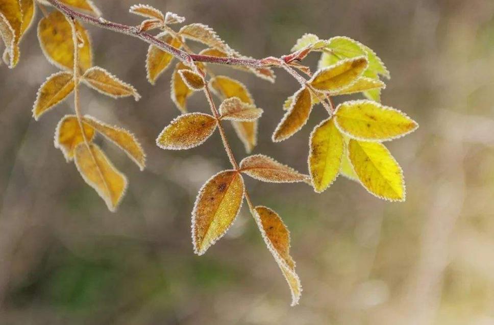 立冬丨朔风起,万物藏,一年中最冷的时候来了