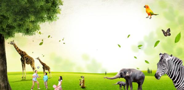2020年最新中班社会教育教案保护野生动物推荐
