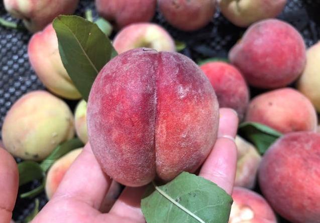 夏季吃桃好处多,口感鲜脆清甜,还能滋润肠道
