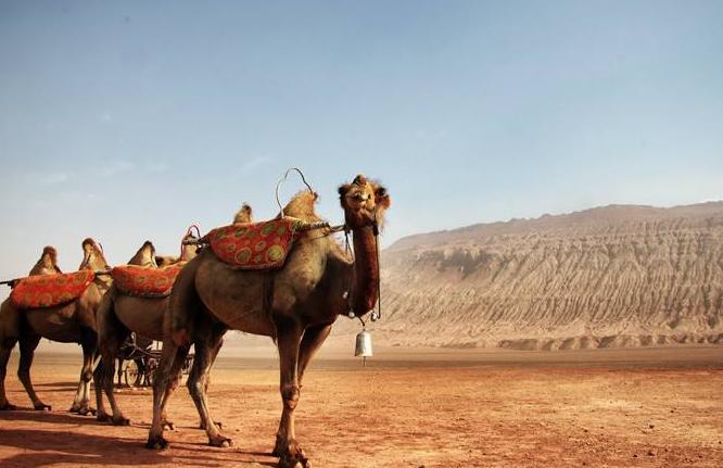 国内游旅游线路,自驾游必备