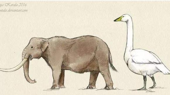 欧洲矮象 还没有10岁儿童高!