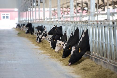 助力脱贫攻坚 蒙牛打造有竞争力的民族奶业——奶牛金钥匙技术示范蒙牛专场走进兴安盟