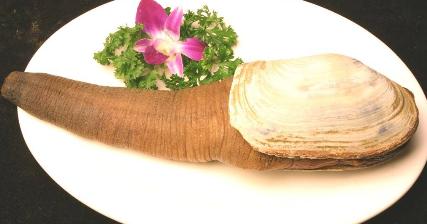 象拔蚌的功效与作用还有营养价值是什么?