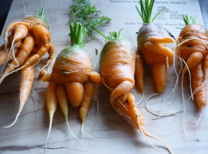核辐射有多可怕?看看日本核辐射后的蔬菜水果,就能知晓了!