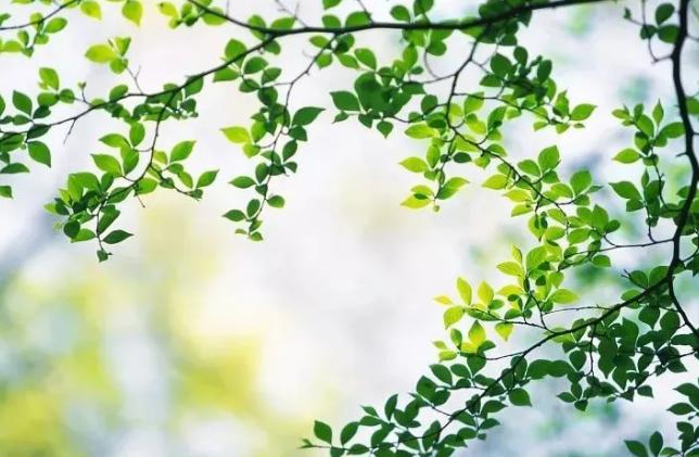 春天养生保健最应该做哪七件事 下面来为大家详细的介绍