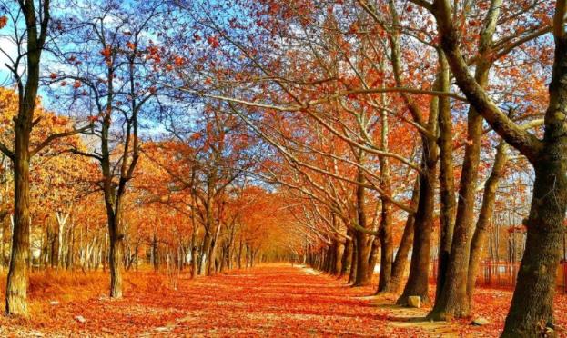秋季养生大概括从衣食住行中注重养生 身体健康与懂得时令养生息息相关