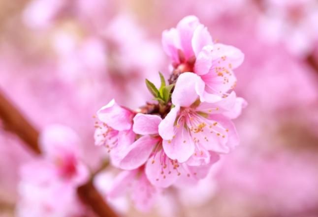 立春之后加强养生 为一整年健康打下良好基础