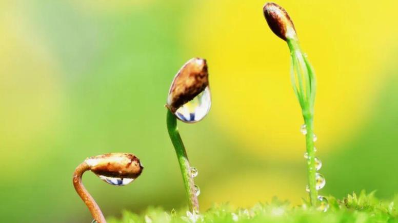 春季养生最新的注意事项 中老年人一定要注意健康