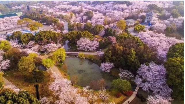 武汉市外地车牌限行限号最新规定 武汉市东湖三大赏樱专线昨全面开通