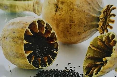 关于罂粟:罂粟壳的功效与作用