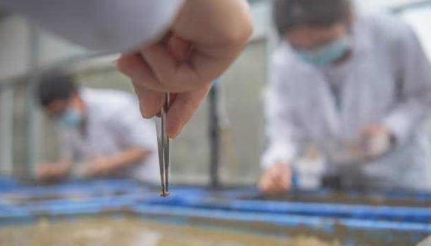 嫦娥五号太空稻移出温室,嫦娥五号太空稻在试验田播种