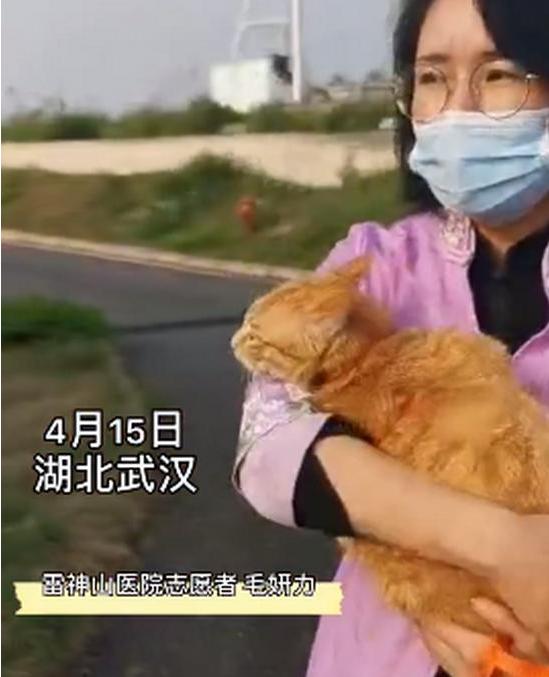 雷神山流浪小奶貓一年后成胖橘 名字更霸氣:雷神喵