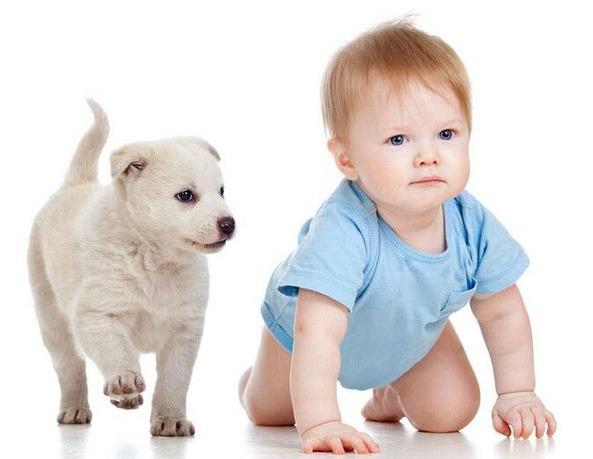 训练宝宝爬行的好处有哪些?训练宝宝爬行可以帮助宝宝获得什么?