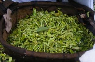 喝茶的好处有哪些?喝茶可以治病养生,日常喝些茶对身体保健很有益处
