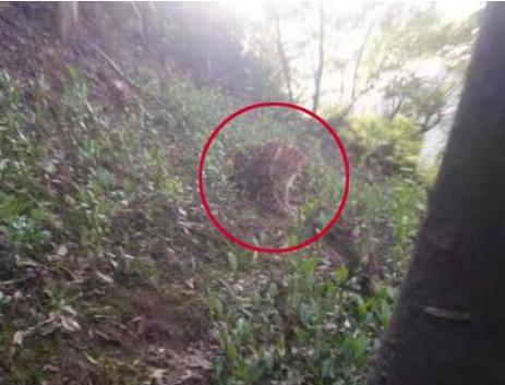 杭州转塘山林疑有豹子出没 杭州出现的豹子到底从哪来?
