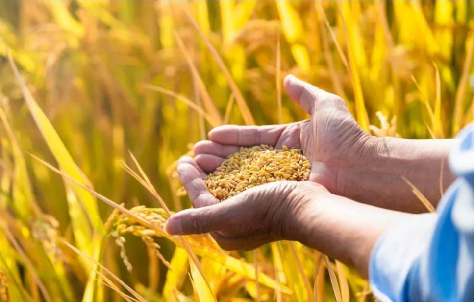 5月国际粮食期货价格创新高 5月国际粮食期货价格上涨对我们生活会有什么影响?