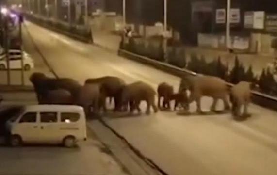 """云南""""堵象人""""4天吃住在车上 云南""""堵象人""""防止象群进入村子"""