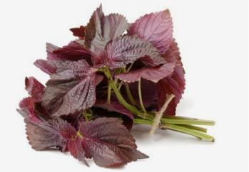如何缓解夏日身体种种不适?可以在饮食中多用一些紫苏叶