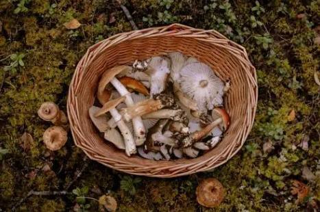 大爷吃菌中毒说医院下雨又下雪,夏季食用野生菌要注意哪些问题?
