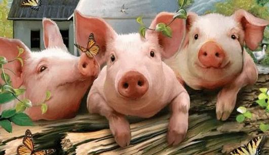 猪肉期货最新行情:猪价止跌反弹是怎么回事?猪肉下半年会回升吗?