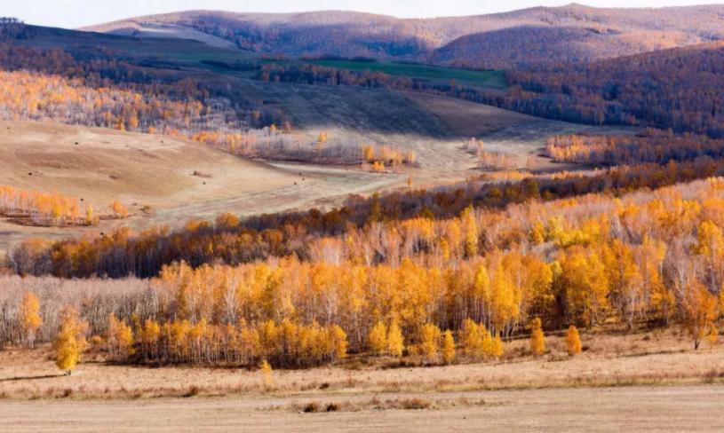 秋天最适合旅游的地方有哪些?呼伦贝尔秋季旅游有哪些新亮点?
