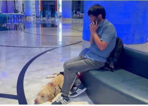 带导盲犬住酒店遭拒 珠海长隆致歉 带导盲犬住酒店遭拒合法吗?