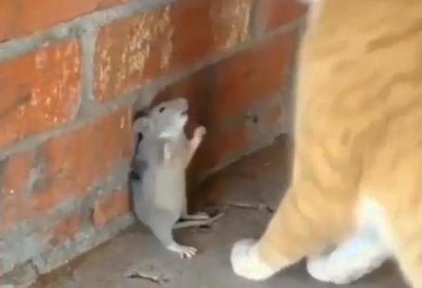 """饭店现老鼠蹿跳 老板:天冷猫不在,网友:""""连环境都保证不了,关门算了!"""""""