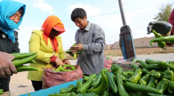 """2021年春节将至,疫情形势下农村蔬菜面临""""涨价"""",不信我们一起看看!"""