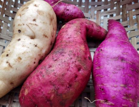 冬季吃什么最养生?适合冬天吃的食物有哪些?