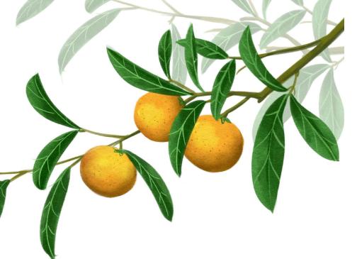 冬季吃了橘子别扔皮,橘皮究竟有哪些妙用?橘皮的营养功效?