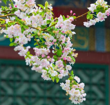春季养生日常禁忌有哪些?春季养生好方法,要了解这些