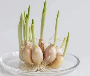 哪些东西发芽了也能吃?哪些东西发芽了尽量不要吃?
