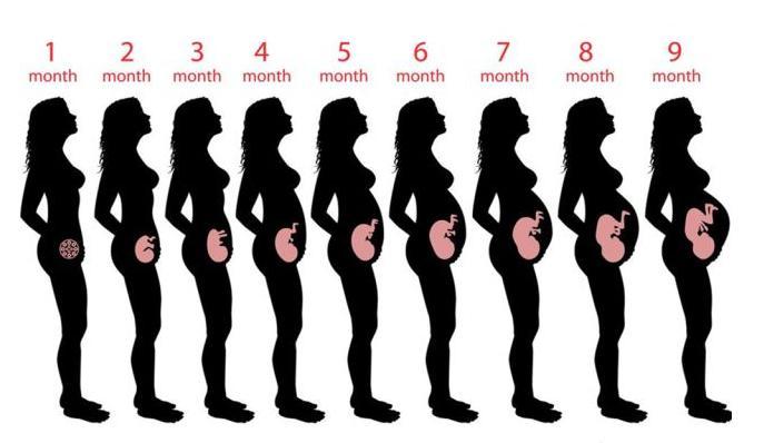 怀孕周期是什么?2021怀孕周期怎么计算?