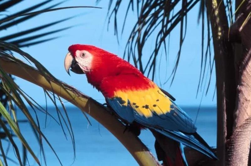 浙江女子围观宰鸭后确诊鹦鹉热,如何有效预防鹦鹉热?