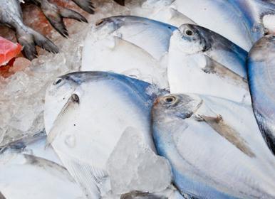 文昌鱼怎么做好吃 文昌鱼的制作方法