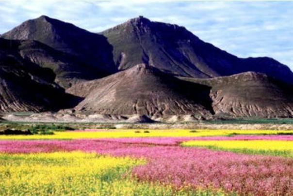 西藏白朗县的科技种菜致富路
