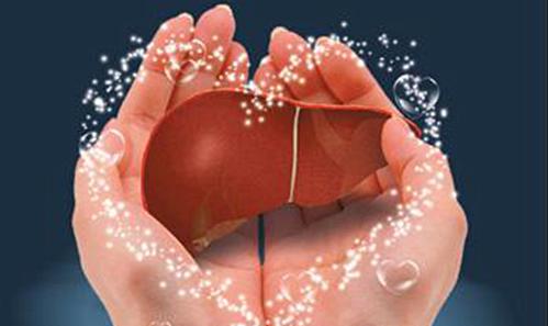 防疫护肝强免疫,位元堂介绍养生护肝中药材