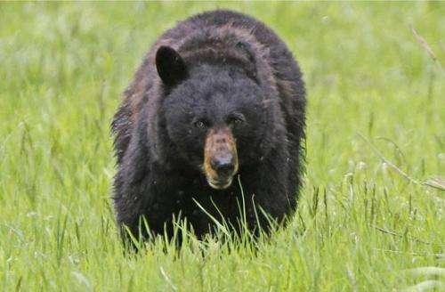 饲养员遭熊攻击身亡 目击者称心情久久不能平复