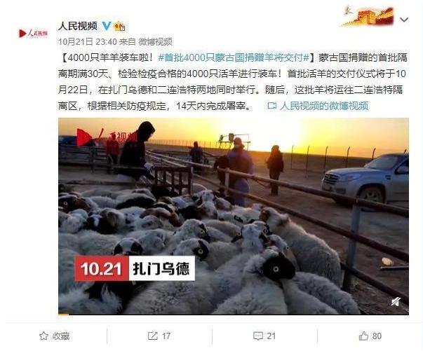 首批4000只蒙古国捐赠羊今日交付 羊来了