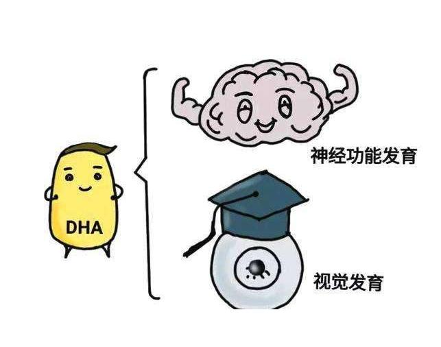 DHA和ARA究竟是什么好东西?它们对宝宝有什么好处?